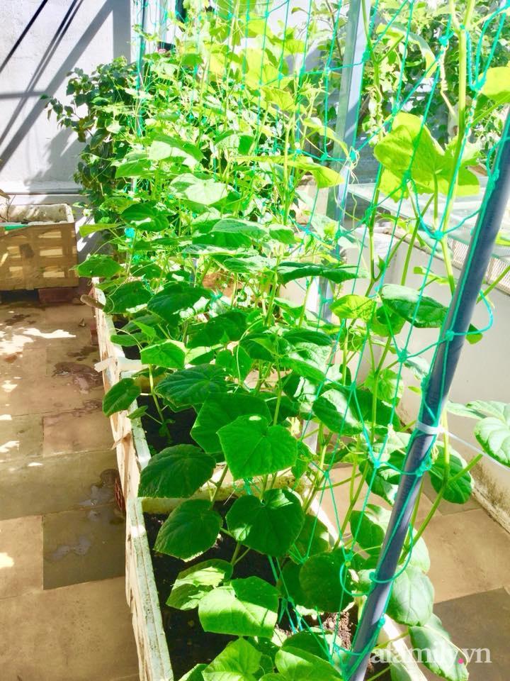 Sân thượng 40m² xanh mát quanh năm với đủ loại rau quả sạch của người phụ nữ về hưu ở Vũng Tàu - Ảnh 12.