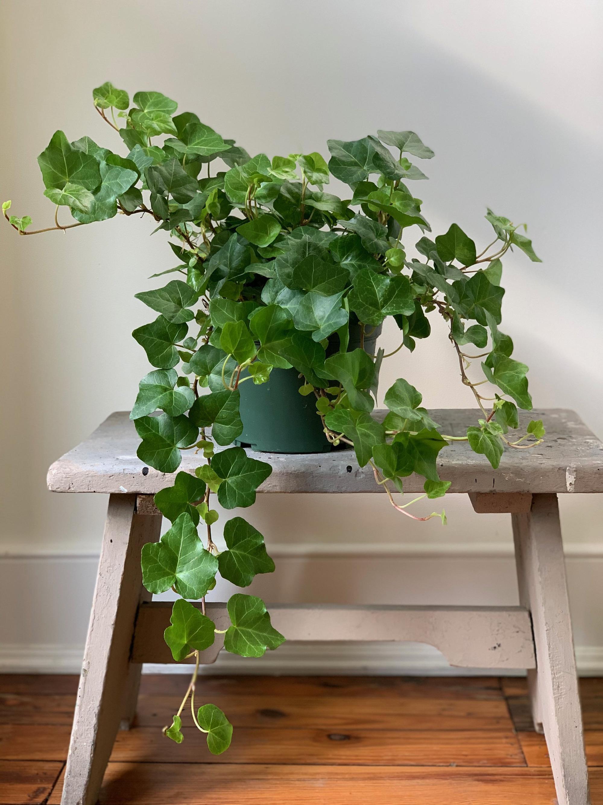 Tập hợp những loại cây trồng trong nhà được NASA gợi ý để cải thiện sức khỏe - Ảnh 1.