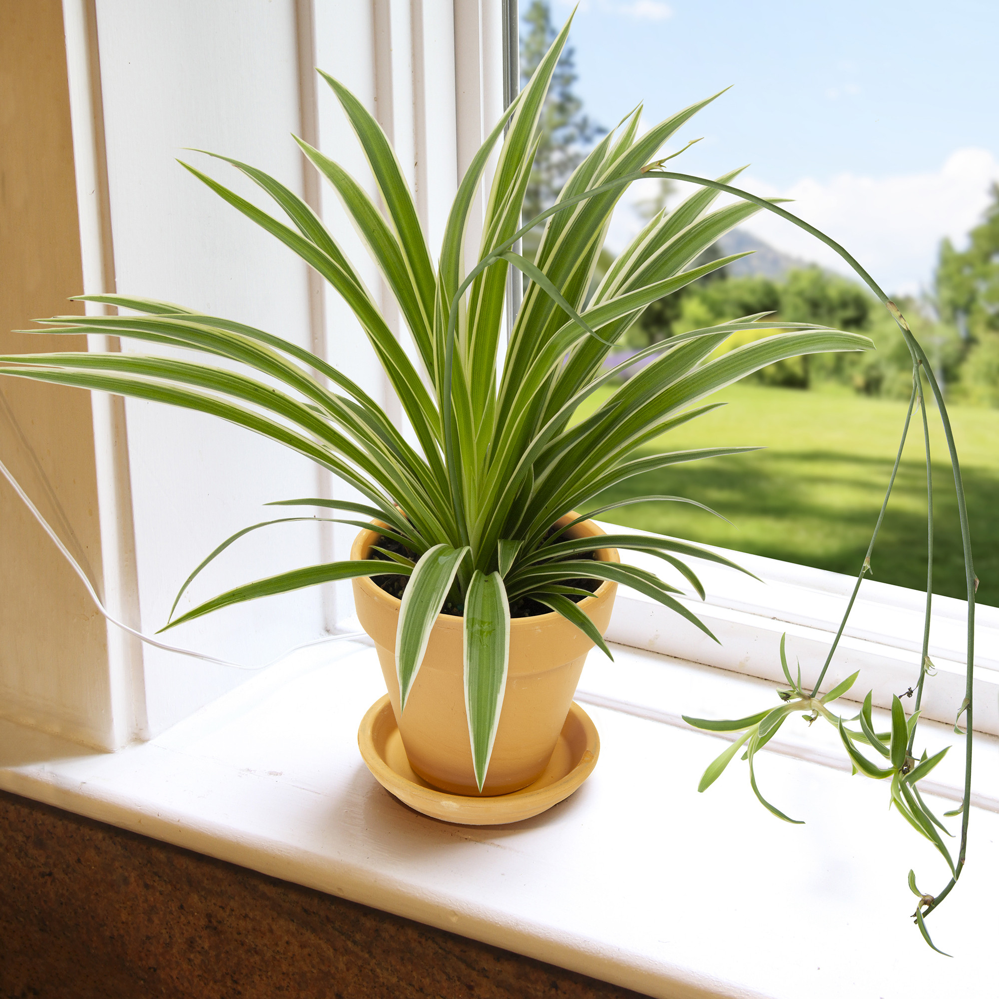 Tập hợp những loại cây trồng trong nhà được NASA gợi ý để cải thiện sức khỏe - Ảnh 2.