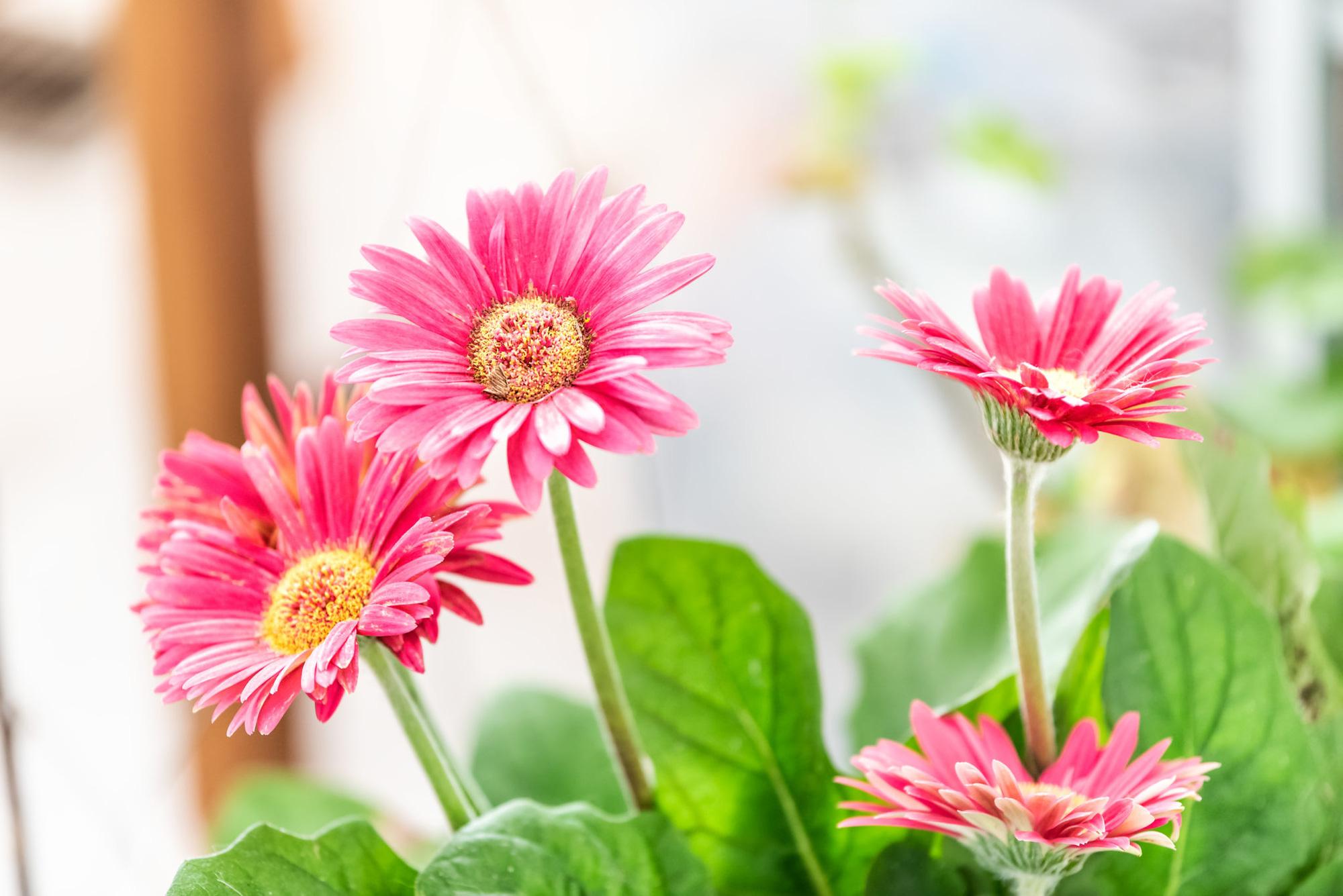 Tập hợp những loại cây trồng trong nhà được NASA gợi ý để cải thiện sức khỏe - Ảnh 7.