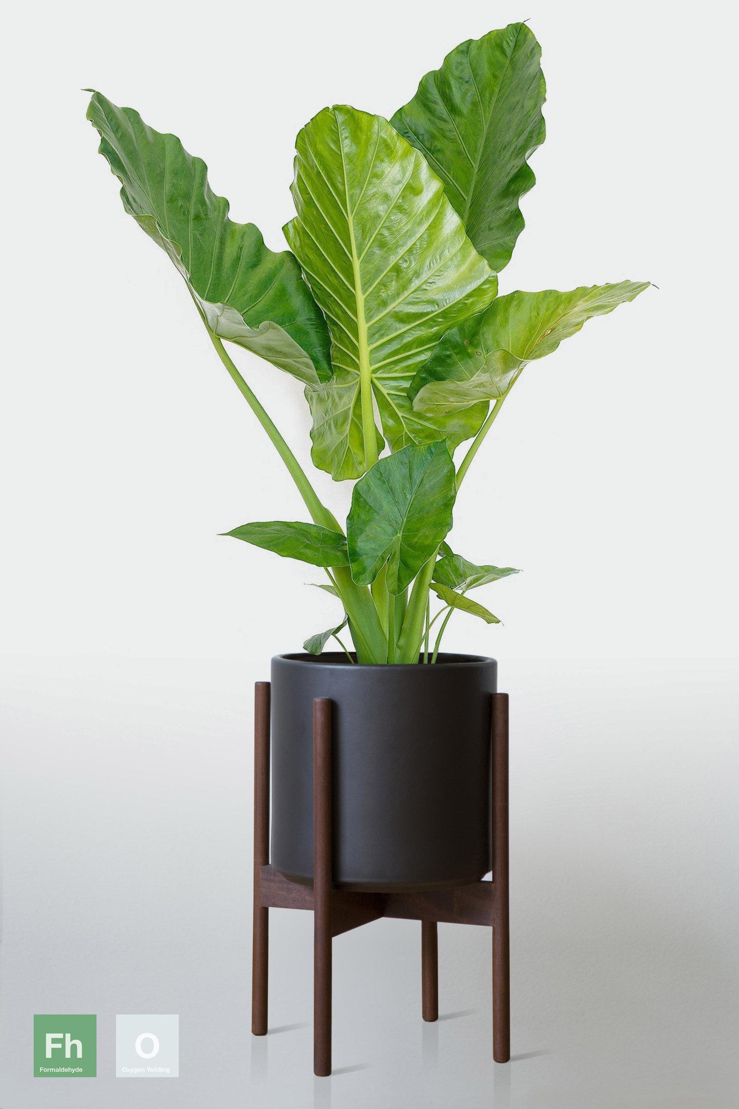 Tập hợp những loại cây trồng trong nhà được NASA gợi ý để cải thiện sức khỏe - Ảnh 9.