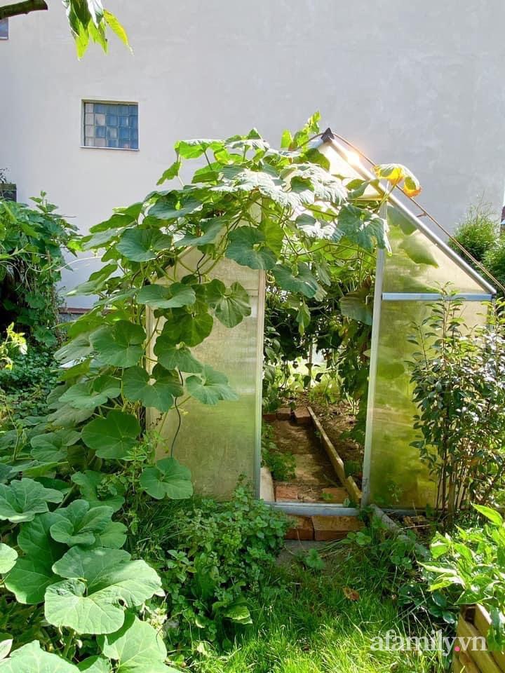 Bất ngờ trước lý do trồng cả vườn rau trái Việt quanh năm tốt tươi của mẹ đảm ở Séc - Ảnh 3.
