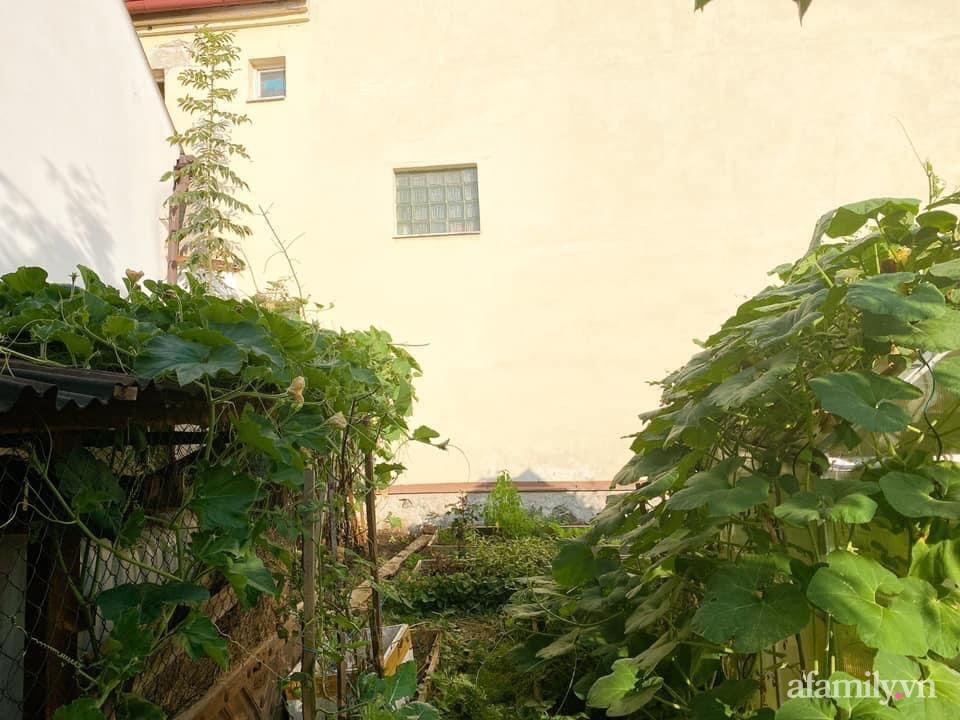 Bất ngờ trước lý do trồng cả vườn rau trái Việt quanh năm tốt tươi của mẹ đảm ở Séc - Ảnh 1.