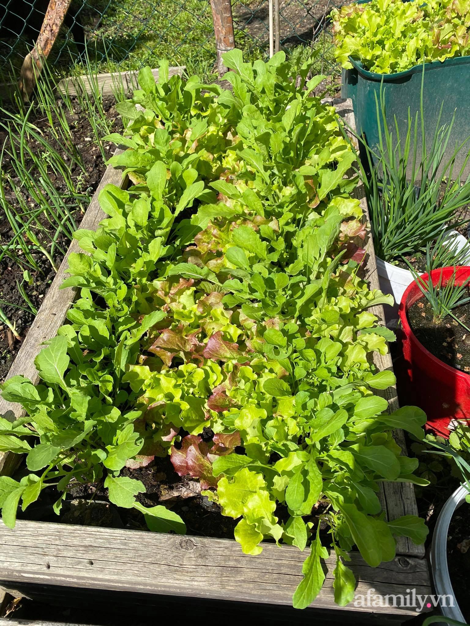Bất ngờ trước lý do trồng cả vườn rau trái Việt quanh năm tốt tươi của mẹ đảm ở Séc - Ảnh 9.