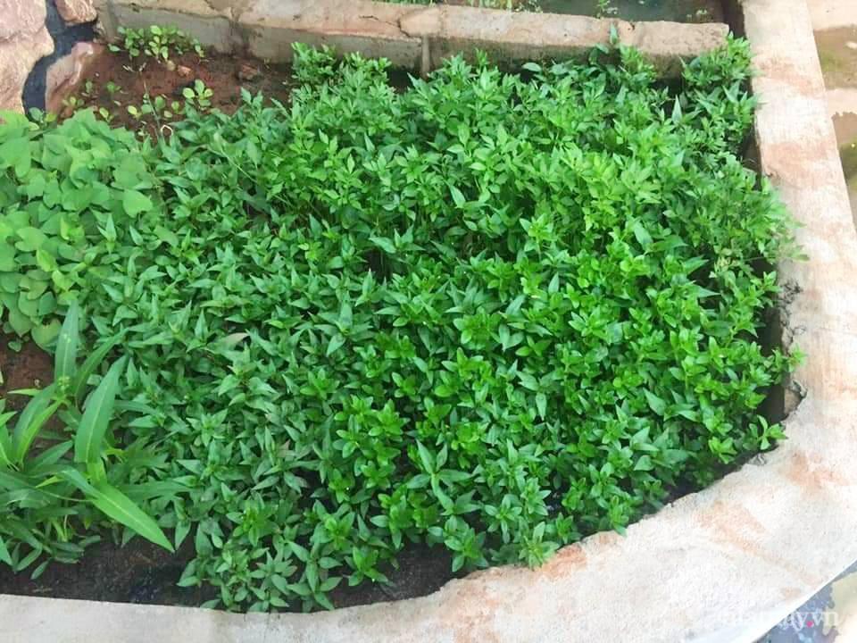 Vườn rau trước cửa xanh mát tốt tươi đủ loại của chàng trai Việt ở châu Phi - Ảnh 9.