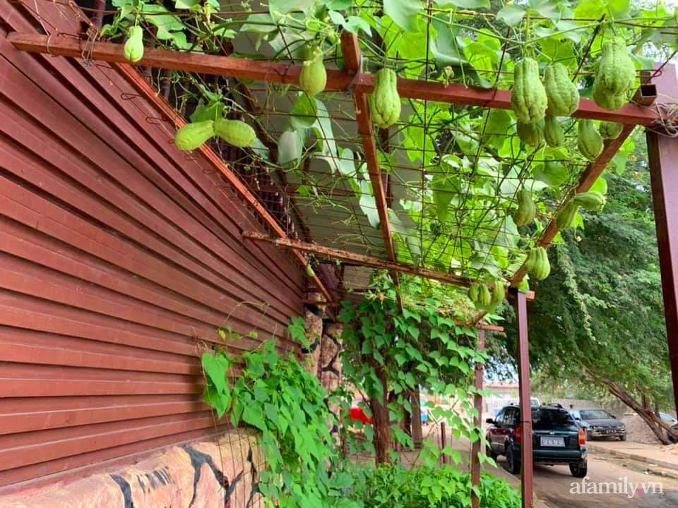 Vườn rau trước cửa xanh mát tốt tươi đủ loại của chàng trai Việt ở châu Phi - Ảnh 8.