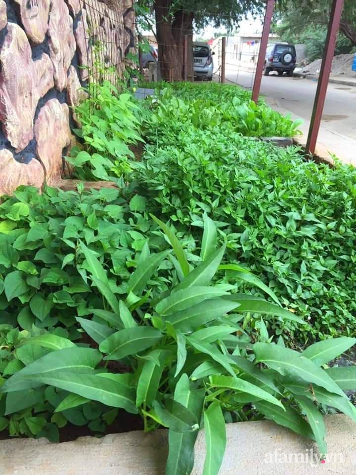 Vườn rau trước cửa xanh mát tốt tươi đủ loại của chàng trai Việt ở châu Phi - Ảnh 3.