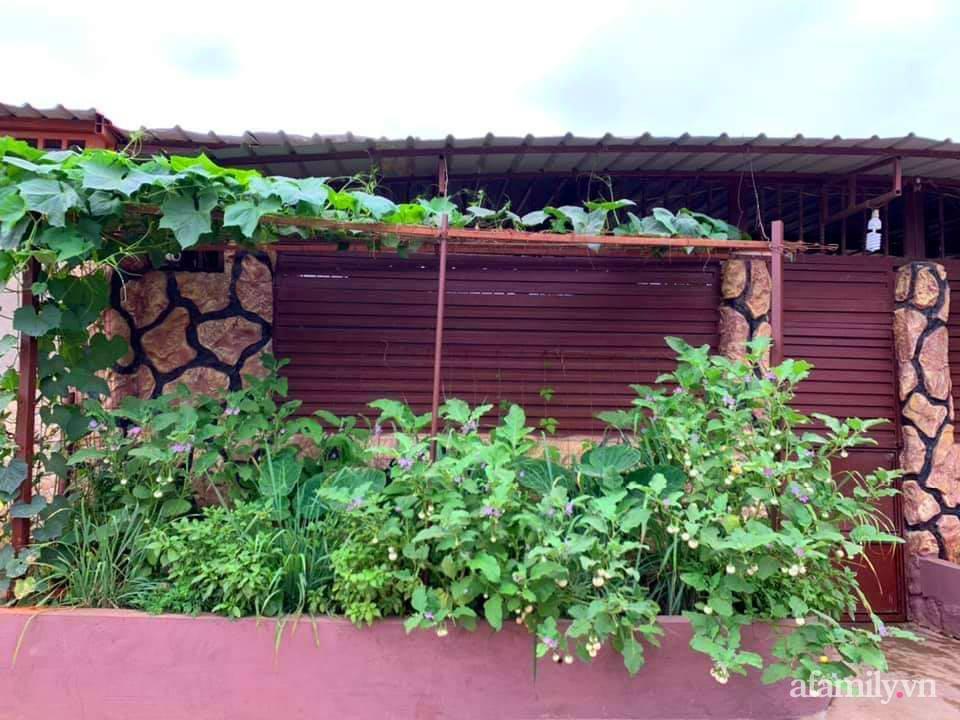 Vườn rau trước cửa xanh mát tốt tươi đủ loại của chàng trai Việt ở châu Phi - Ảnh 1.
