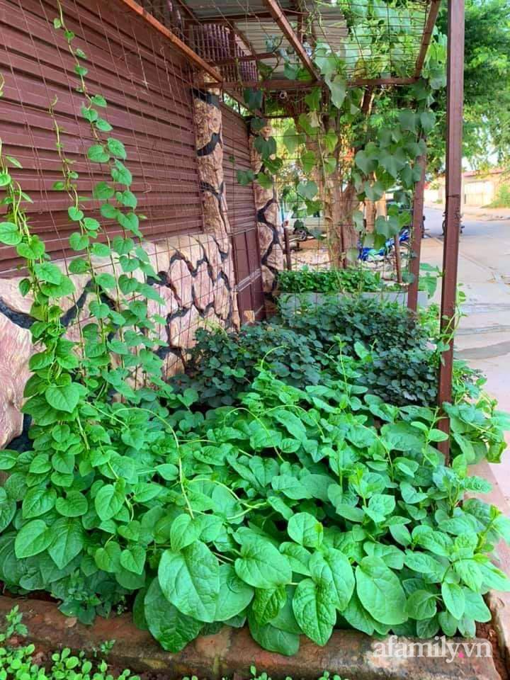 Vườn rau trước cửa xanh mát tốt tươi đủ loại của chàng trai Việt ở châu Phi - Ảnh 2.