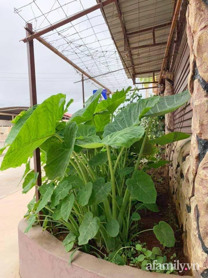 Vườn rau trước cửa xanh mát tốt tươi đủ loại của chàng trai Việt ở châu Phi - Ảnh 5.