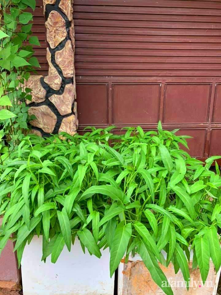 Vườn rau trước cửa xanh mát tốt tươi đủ loại của chàng trai Việt ở châu Phi - Ảnh 4.