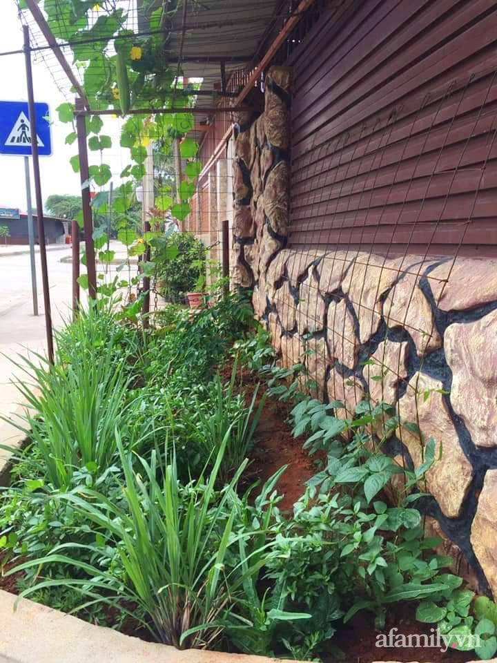 Vườn rau trước cửa xanh mát tốt tươi đủ loại của chàng trai Việt ở châu Phi - Ảnh 6.