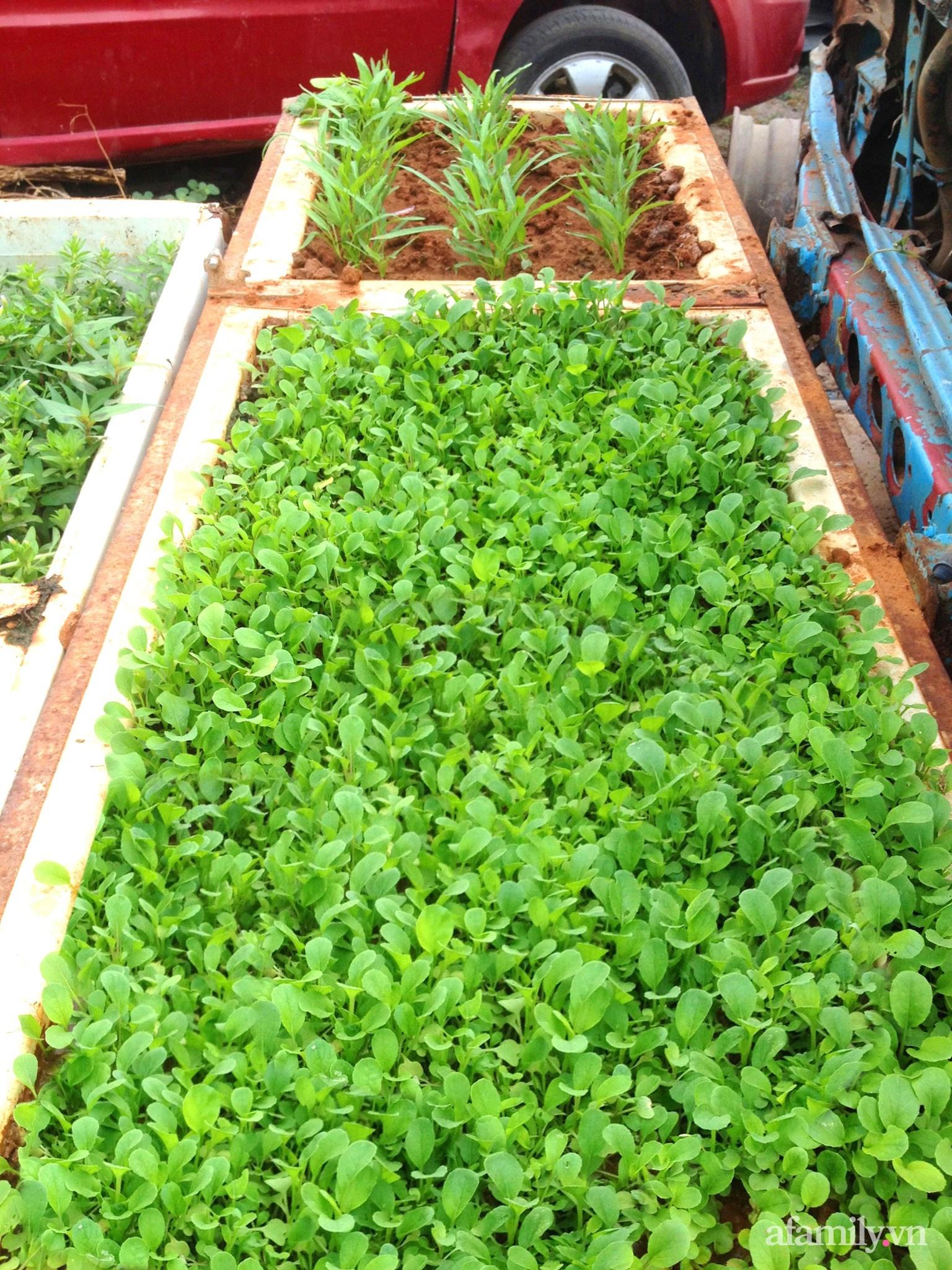 Vườn rau trước cửa xanh mát tốt tươi đủ loại của chàng trai Việt ở châu Phi - Ảnh 14.