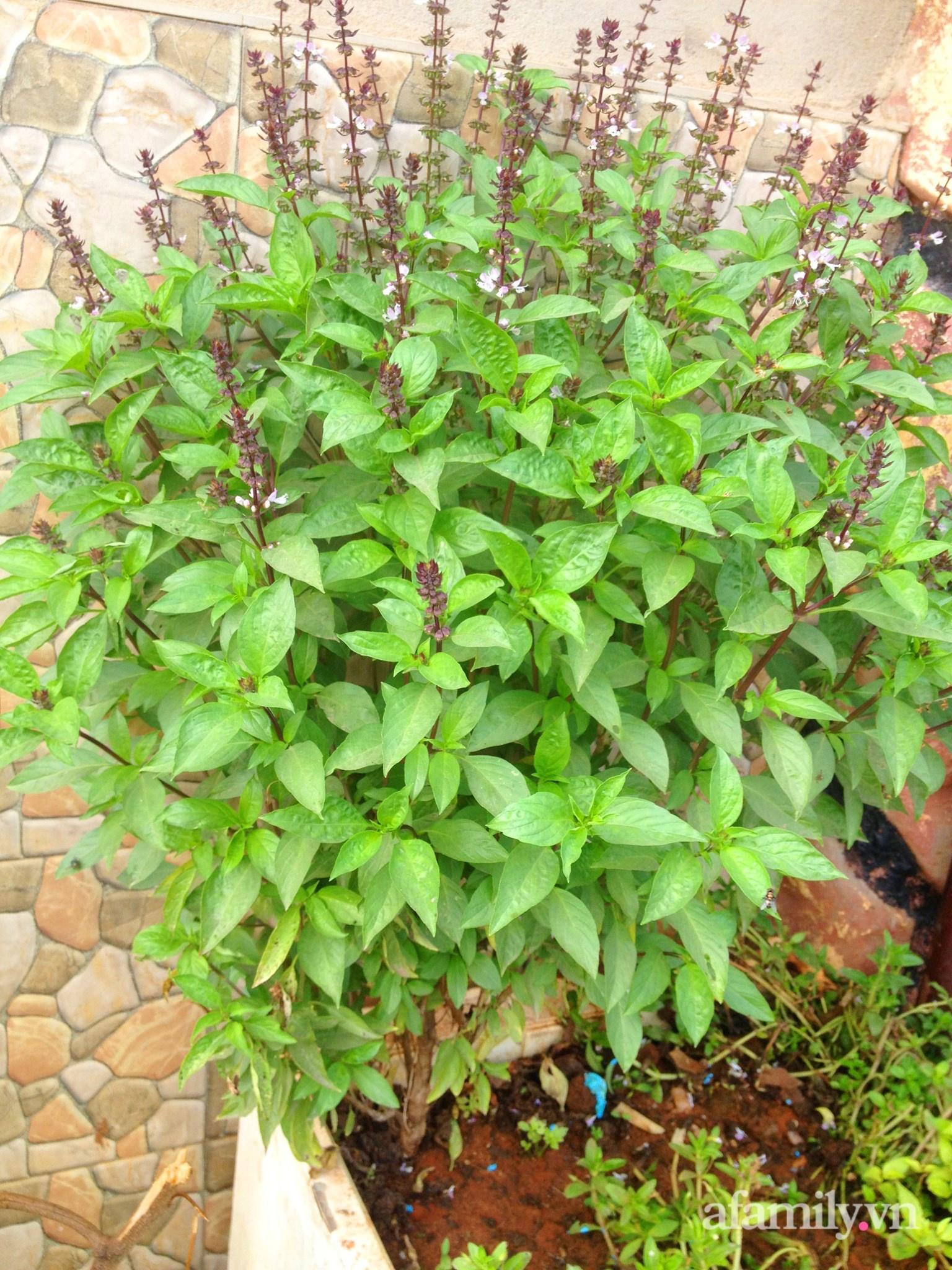 Vườn rau trước cửa xanh mát tốt tươi đủ loại của chàng trai Việt ở châu Phi - Ảnh 12.