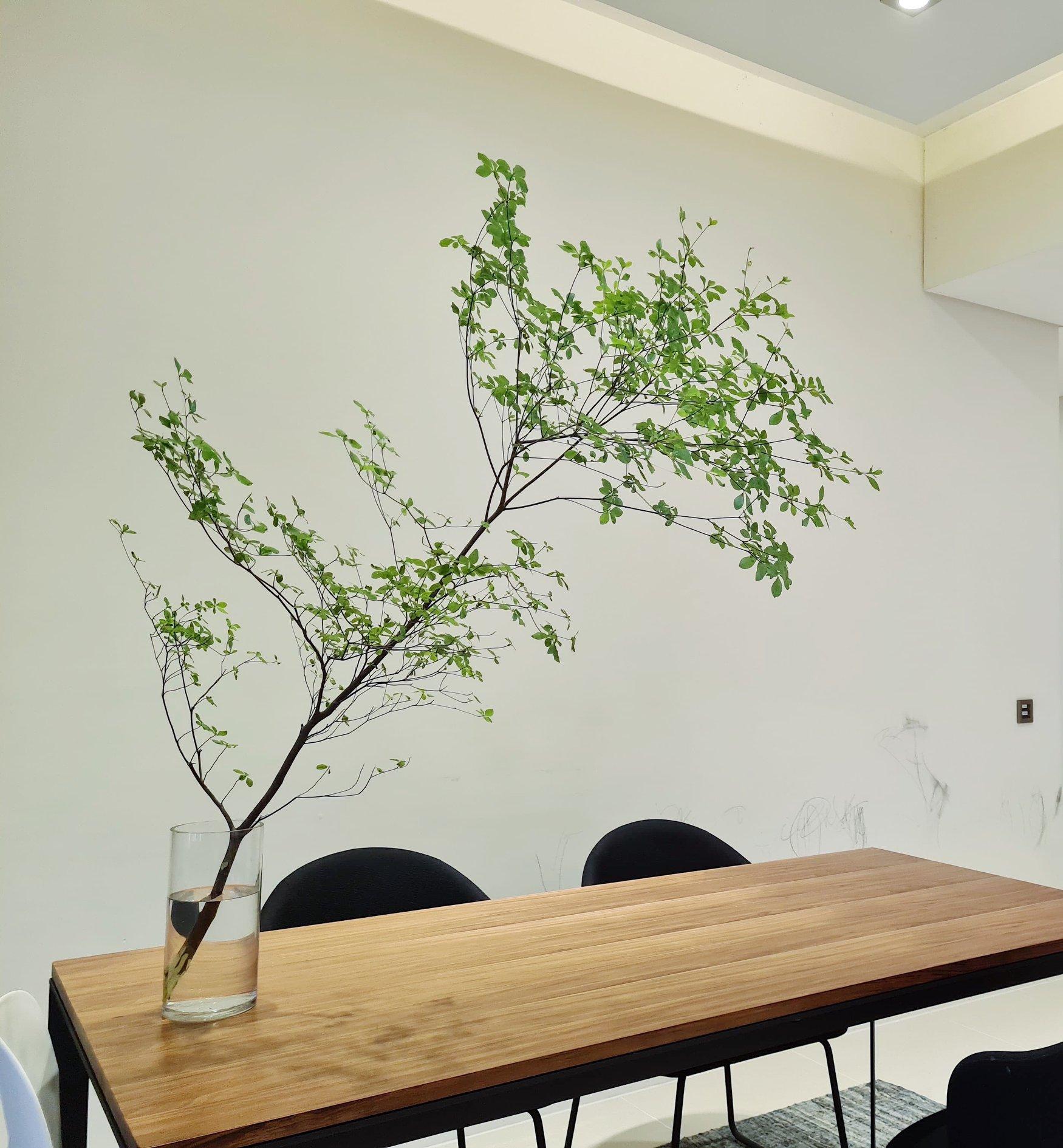Dạo gần đây thị trường rộ mua cây thạch nam: Là loại cây gì, giá đắt không mà chị em yêu thích thế? - Ảnh 2.