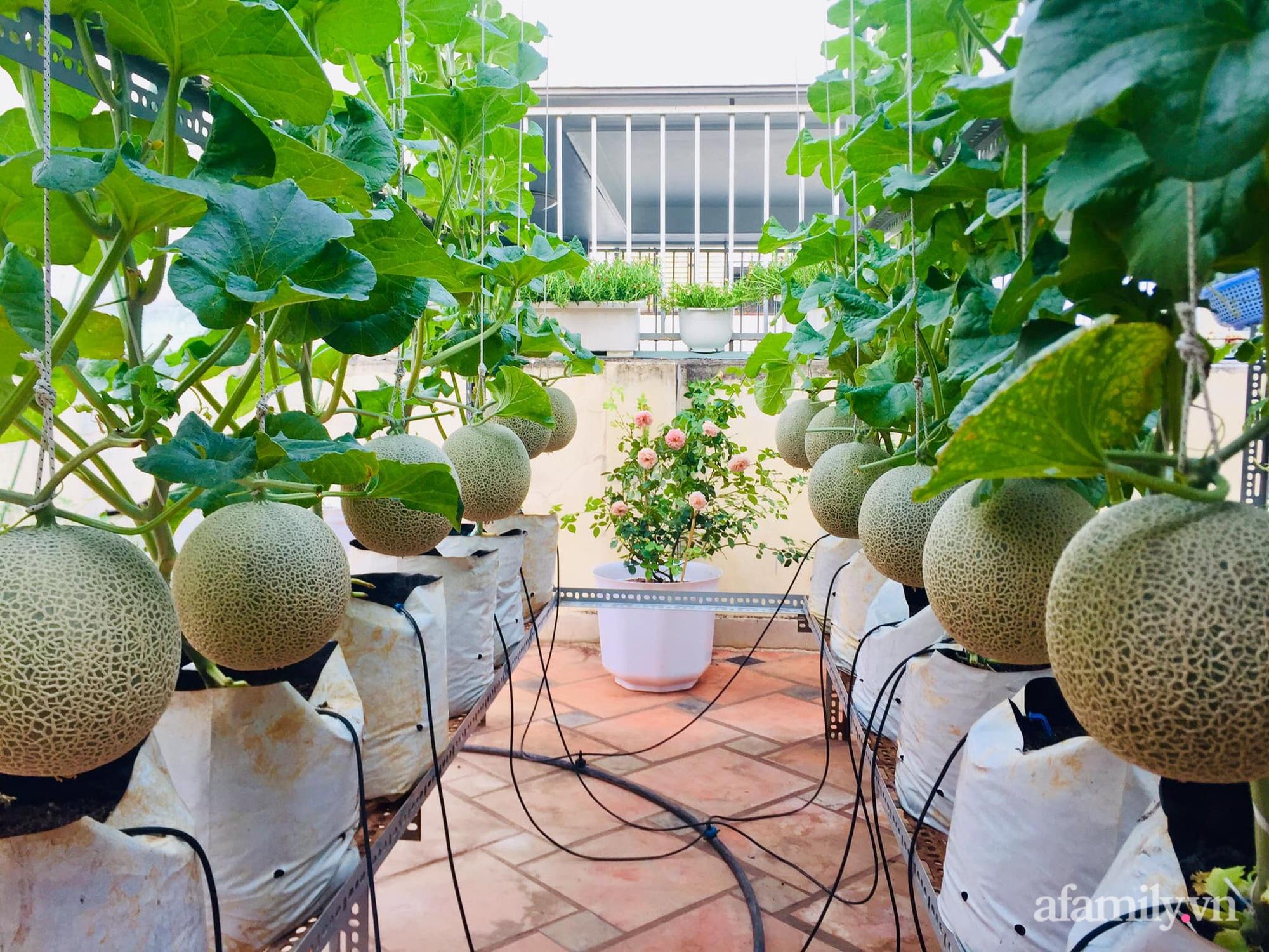 Ghé thăm sân thượng thu hoạch cả tạ dưa đủ loại của người phụ nữ đảm đang ở quận 6, Sài Gòn - Ảnh 2.
