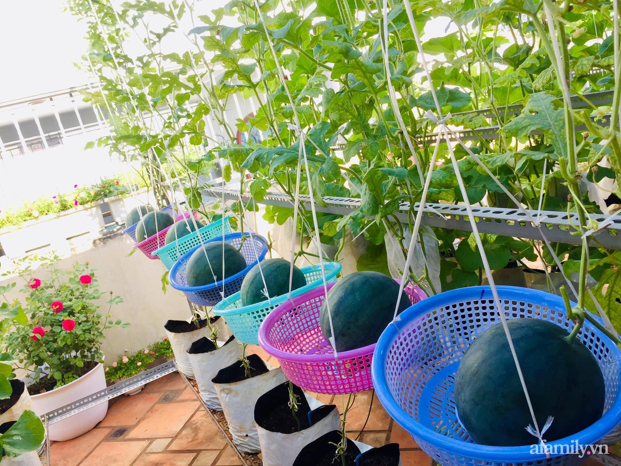 Ghé thăm sân thượng thu hoạch cả tạ dưa đủ loại của người phụ nữ đảm đang ở quận 6, Sài Gòn - Ảnh 6.