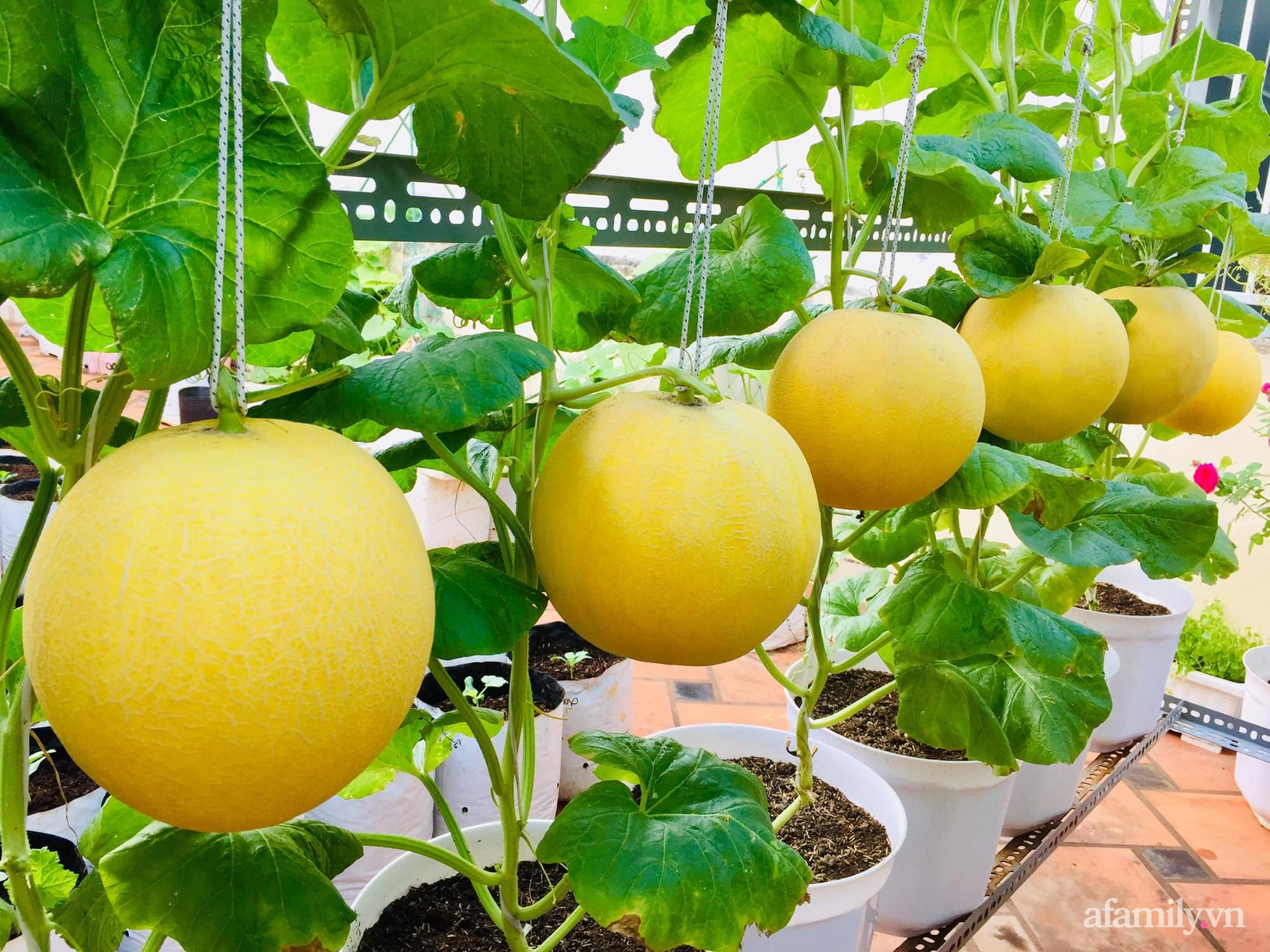 Ghé thăm sân thượng thu hoạch cả tạ dưa đủ loại của người phụ nữ đảm đang ở quận 6, Sài Gòn - Ảnh 7.
