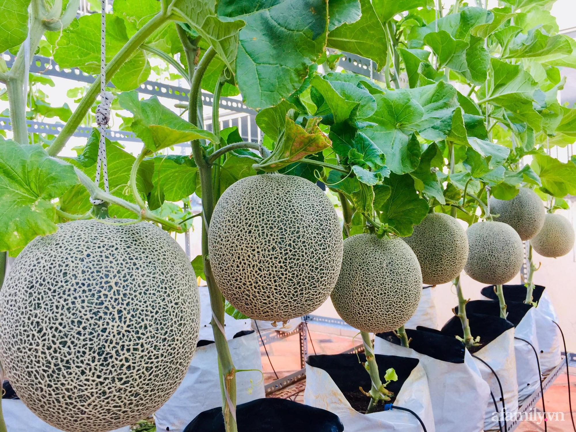 Ghé thăm sân thượng thu hoạch cả tạ dưa đủ loại của người phụ nữ đảm đang ở quận 6, Sài Gòn - Ảnh 10.