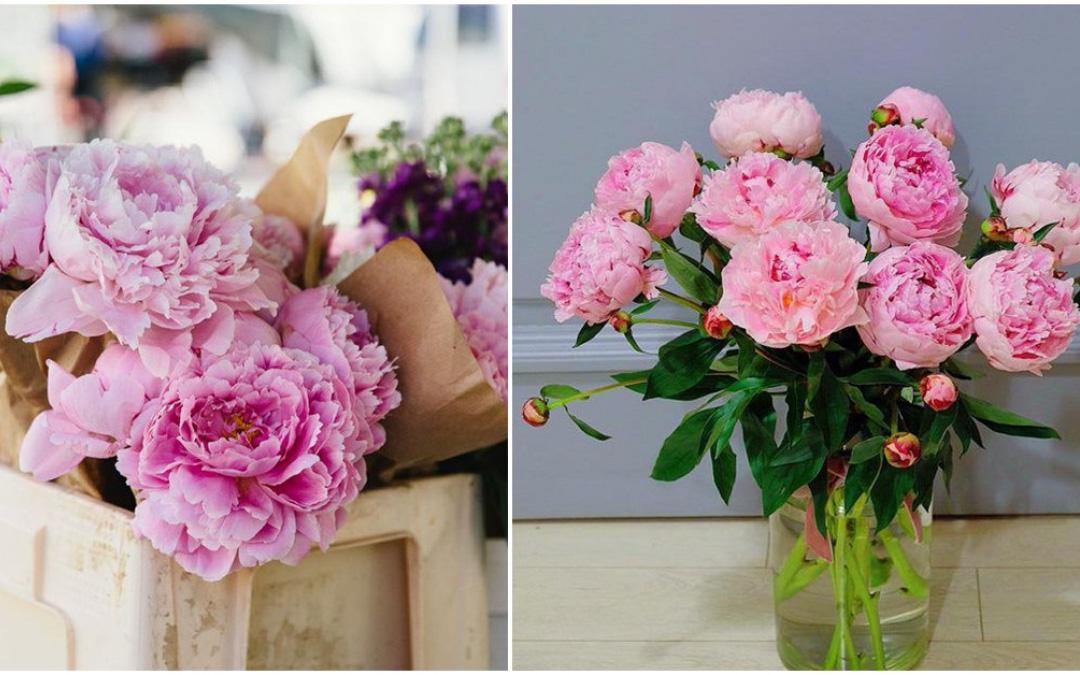 Giúp bạn cách chọn hoa phù hợp với mỗi không gian trong nhà