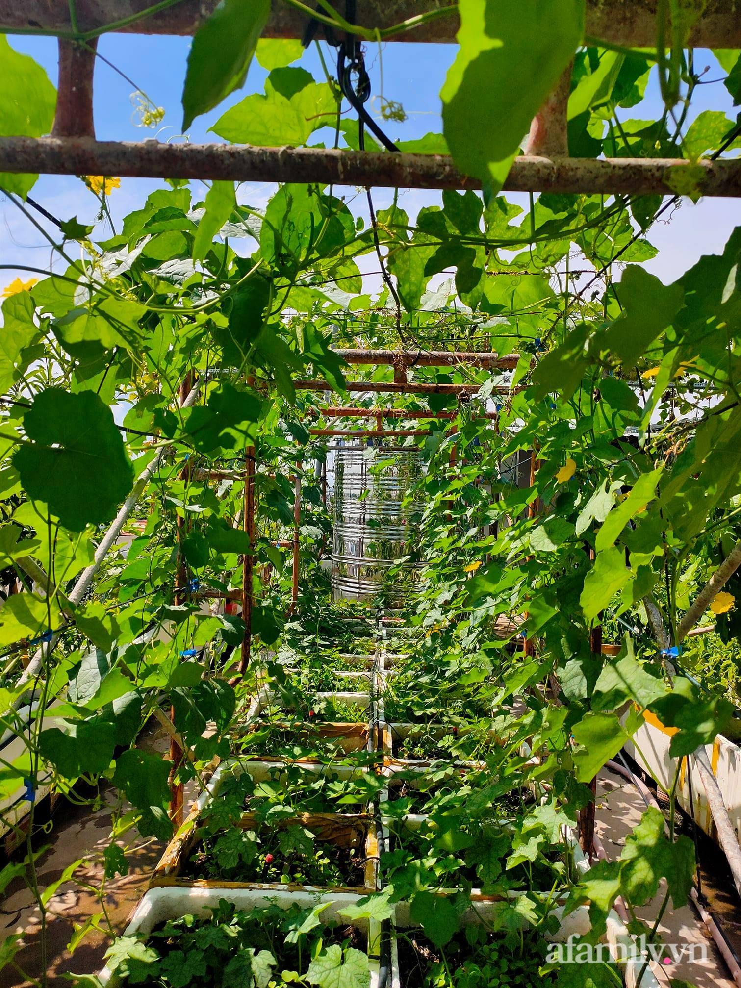 Vườn cây ăn quả 130m2 trên sân thượng quanh năm xanh mát ở quận 9, Sài Gòn - Ảnh 4.