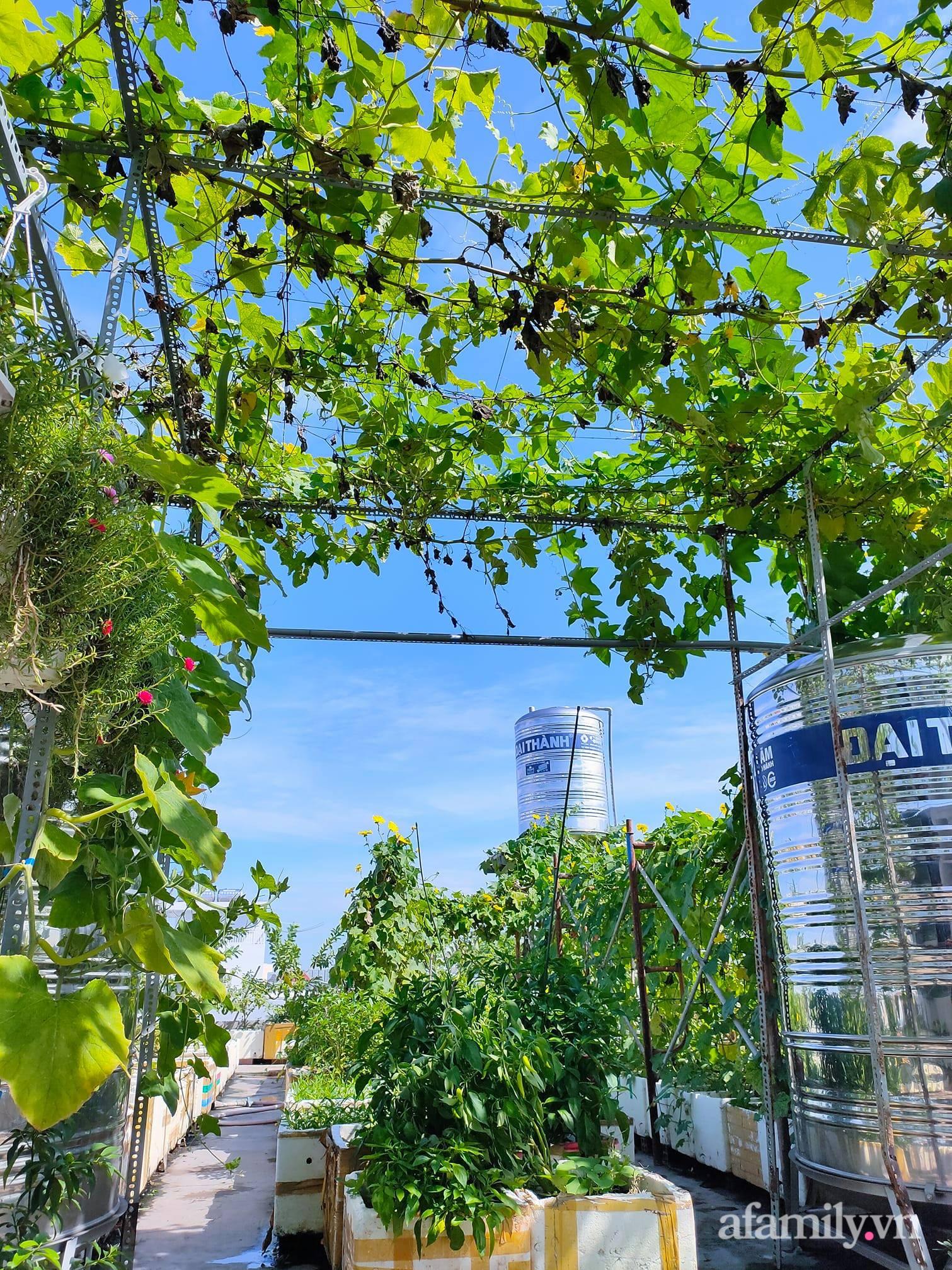 Vườn cây ăn quả 130m2 trên sân thượng quanh năm xanh mát ở quận 9, Sài Gòn - Ảnh 5.
