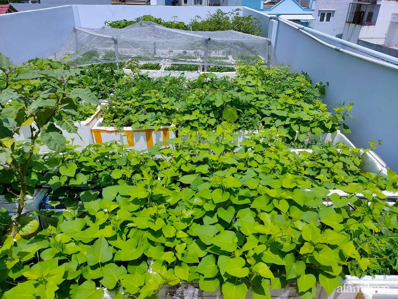 Vườn cây ăn quả 130m2 trên sân thượng quanh năm xanh mát ở quận 9, Sài Gòn - Ảnh 2.
