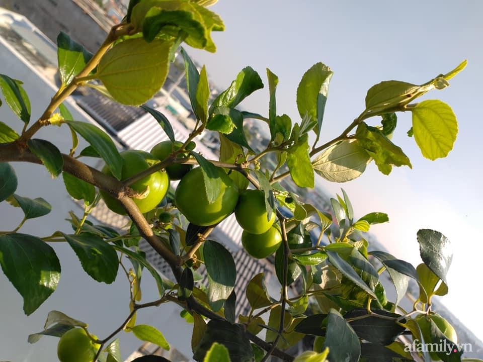 Vườn cây ăn quả 130m2 trên sân thượng quanh năm xanh mát ở quận 9, Sài Gòn - Ảnh 13.