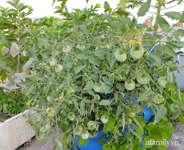 Vườn cây ăn quả 130m2 trên sân thượng quanh năm xanh mát ở quận 9, Sài Gòn - Ảnh 6.