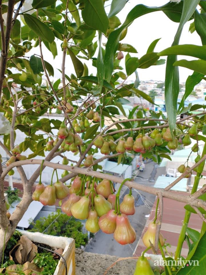 Vườn cây ăn quả 130m2 trên sân thượng quanh năm xanh mát ở quận 9, Sài Gòn - Ảnh 15.