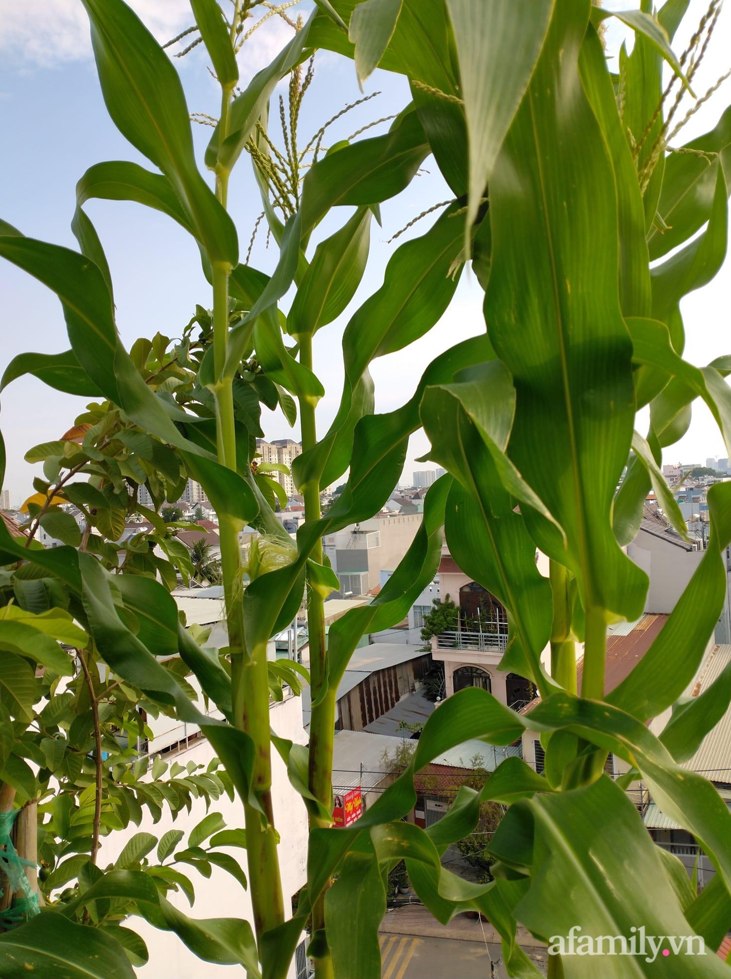 Vườn cây ăn quả 130m2 trên sân thượng quanh năm xanh mát ở quận 9, Sài Gòn - Ảnh 7.
