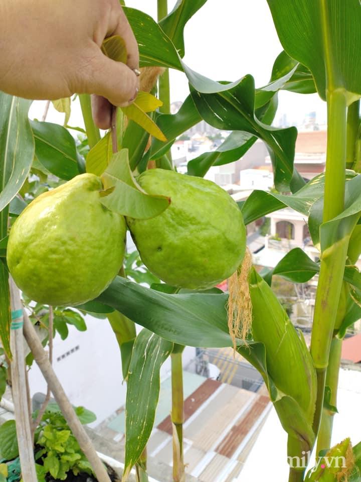 Vườn cây ăn quả 130m2 trên sân thượng quanh năm xanh mát ở quận 9, Sài Gòn - Ảnh 8.