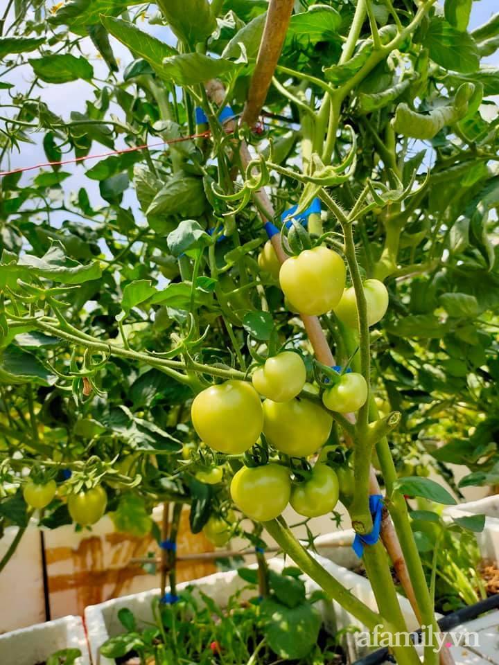 Vườn cây ăn quả 130m2 trên sân thượng quanh năm xanh mát ở quận 9, Sài Gòn - Ảnh 17.