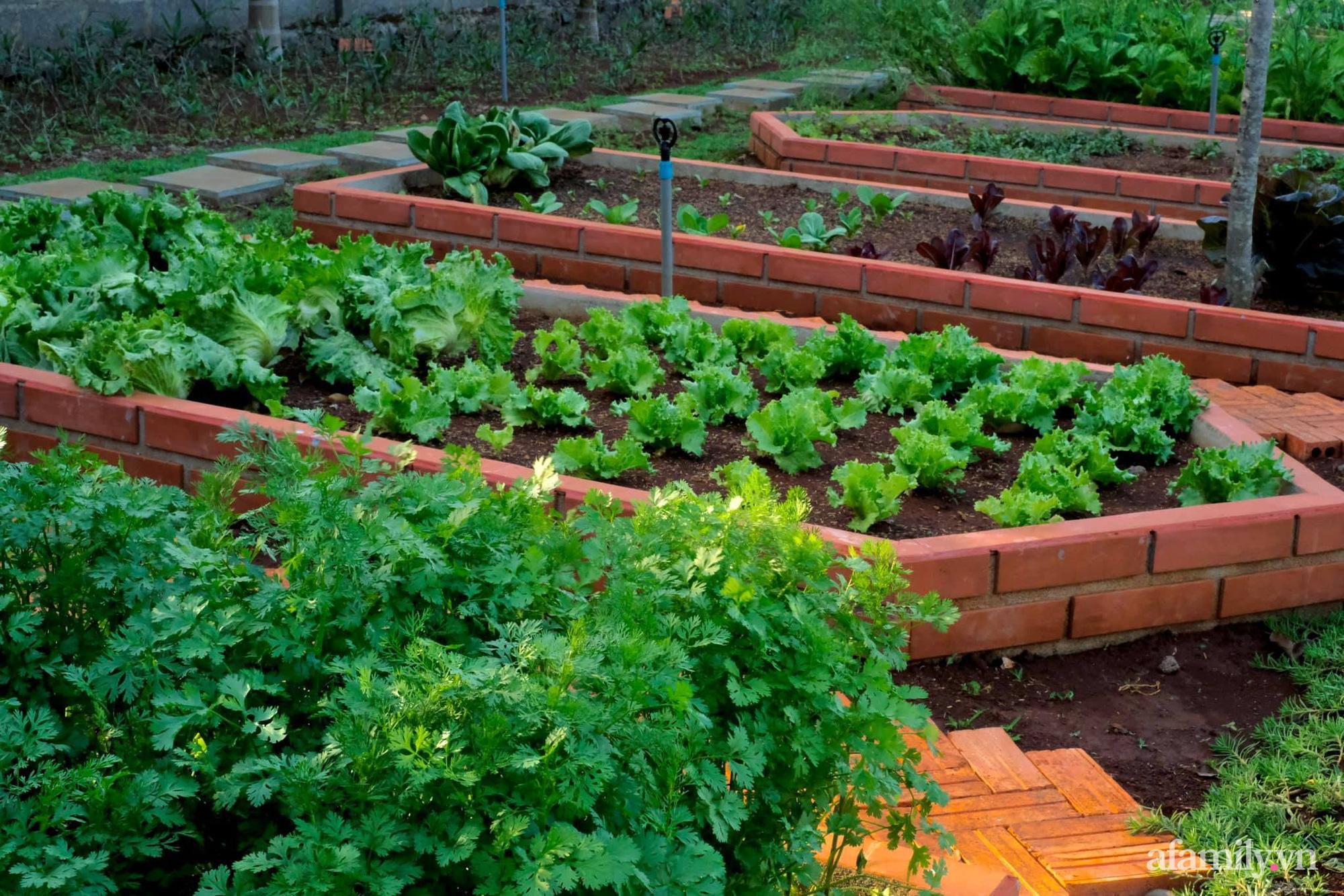 """Vì muốn sống gần thiên nhiên, 5 cô gái đã """"hùn vốn"""" biến mảnh đất trống thành khu vườn xanh mát ở Buôn Mê Thuột - Ảnh 8."""