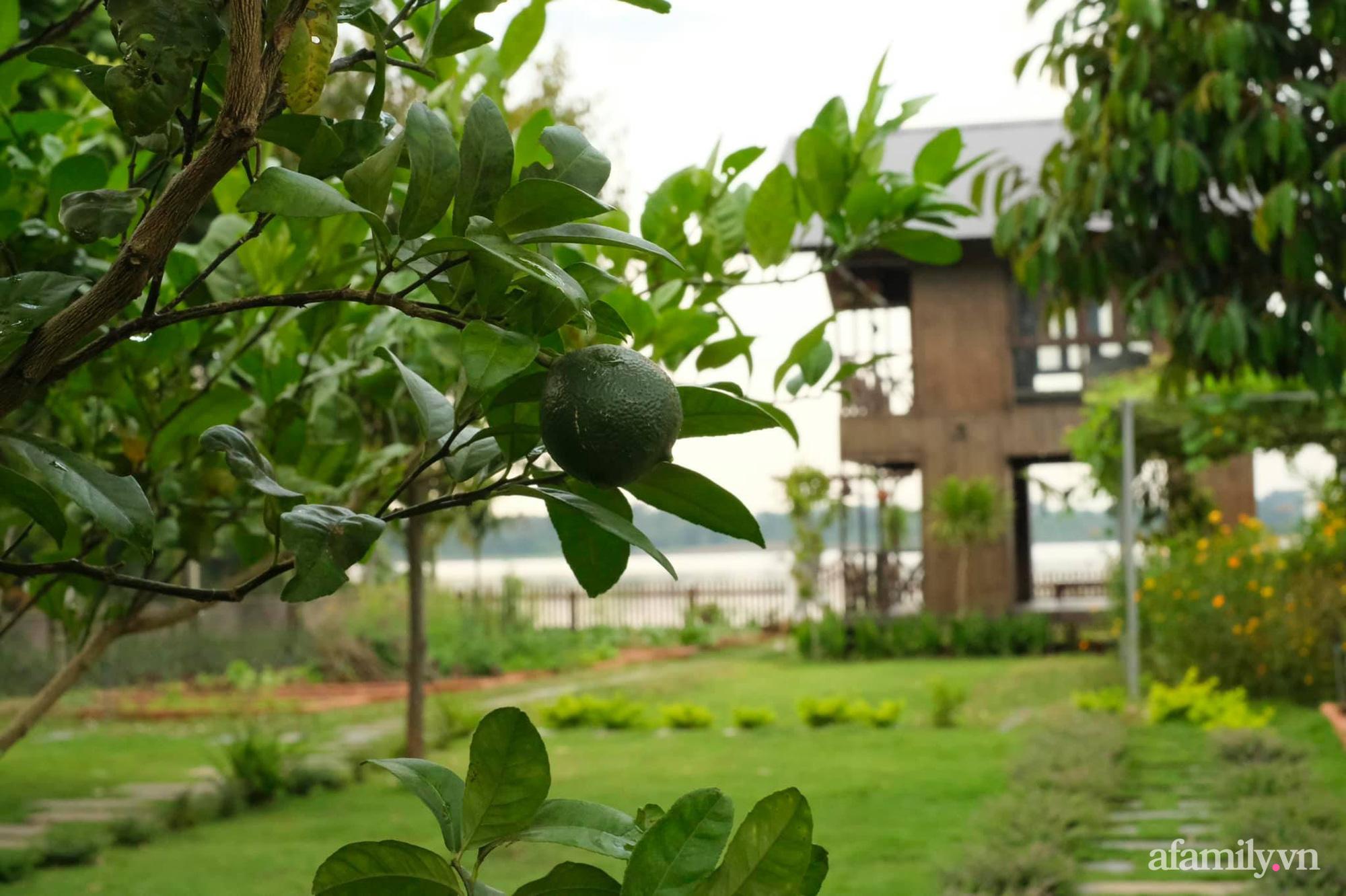 """Vì muốn sống gần thiên nhiên, 5 cô gái đã """"hùn vốn"""" biến mảnh đất trống thành khu vườn xanh mát ở Buôn Mê Thuột - Ảnh 7."""