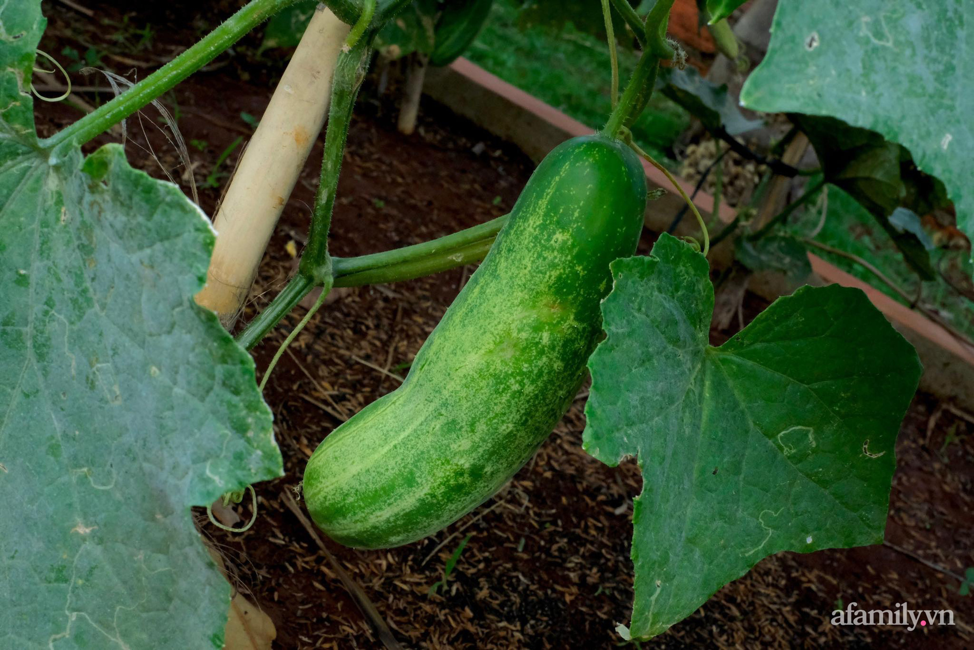 """Vì muốn sống gần thiên nhiên, 5 cô gái đã """"hùn vốn"""" biến mảnh đất trống thành khu vườn xanh mát ở Buôn Mê Thuột - Ảnh 16."""
