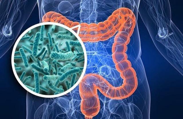 Vì sao nên bổ sung men vi sinh để hệ tiêu hóa khỏe? - Ảnh 1.