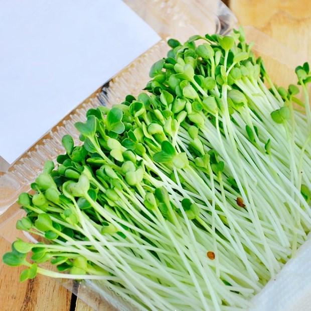 Rau mầm trồng tại nhà đơn giản - giá rẻ, khi chế biến món ăn lại cực ngon, chị em đừng bỏ lỡ! - Ảnh 1.
