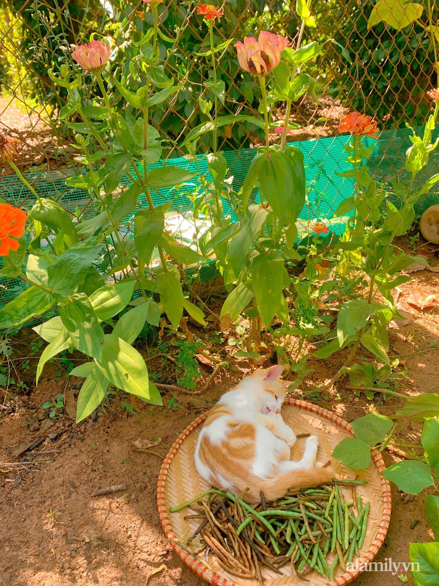 Chán cuộc sống bon chen ở phố, cặp vợ chồng 9X có thu nhập ổn định quyết định chọn về quê sống bình yên bên vườn tược ở Đắk Lắk - Ảnh 10.