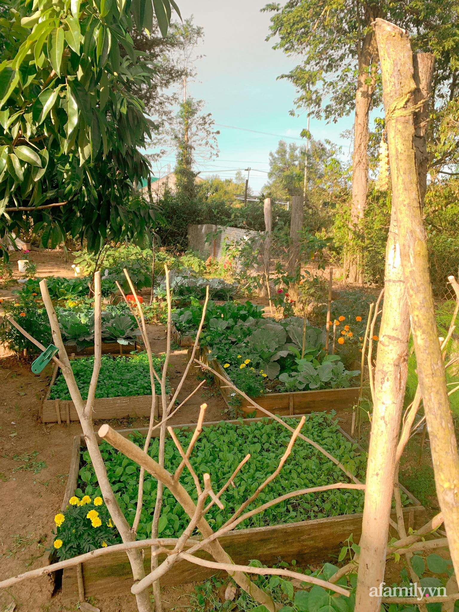 Chán cuộc sống bon chen ở phố, cặp vợ chồng 9X có thu nhập ổn định quyết định chọn về quê sống bình yên bên vườn tược ở Đắk Lắk - Ảnh 11.