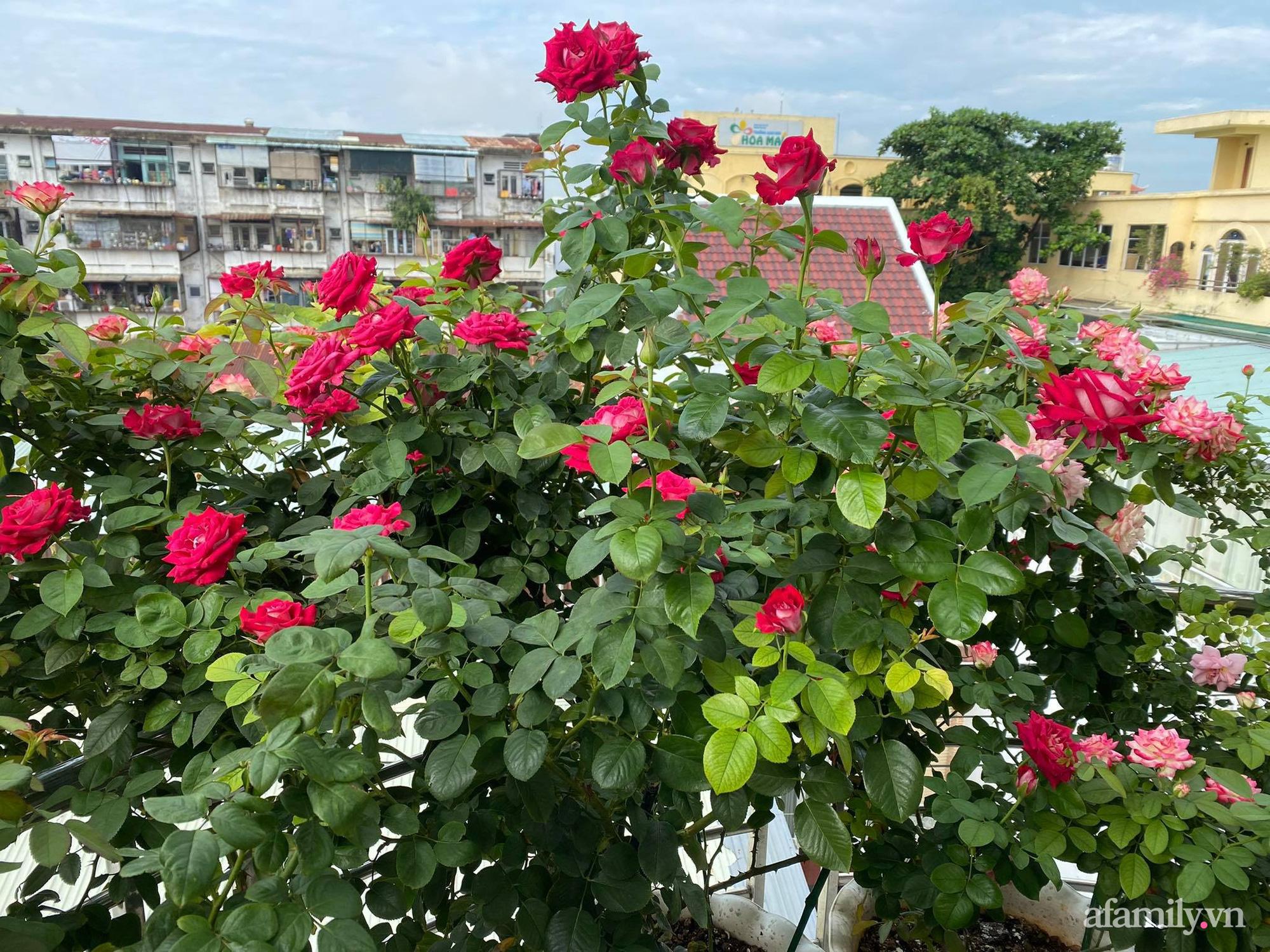 Sân thượng phủ kín hoa hồng và rau quả sạch được chăm chút nhờ bàn tay khéo léo của Hoa hậu Janny Thủy Trần - Ảnh 3.