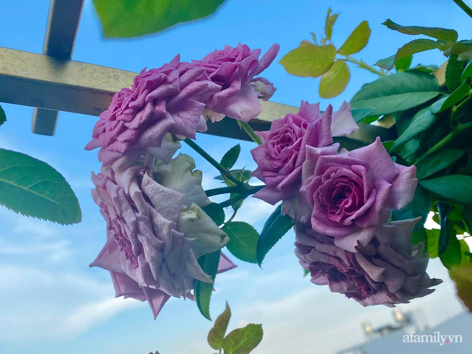 Sân thượng phủ kín hoa hồng và rau quả sạch được chăm chút nhờ bàn tay khéo léo của Hoa hậu Janny Thủy Trần - Ảnh 9.
