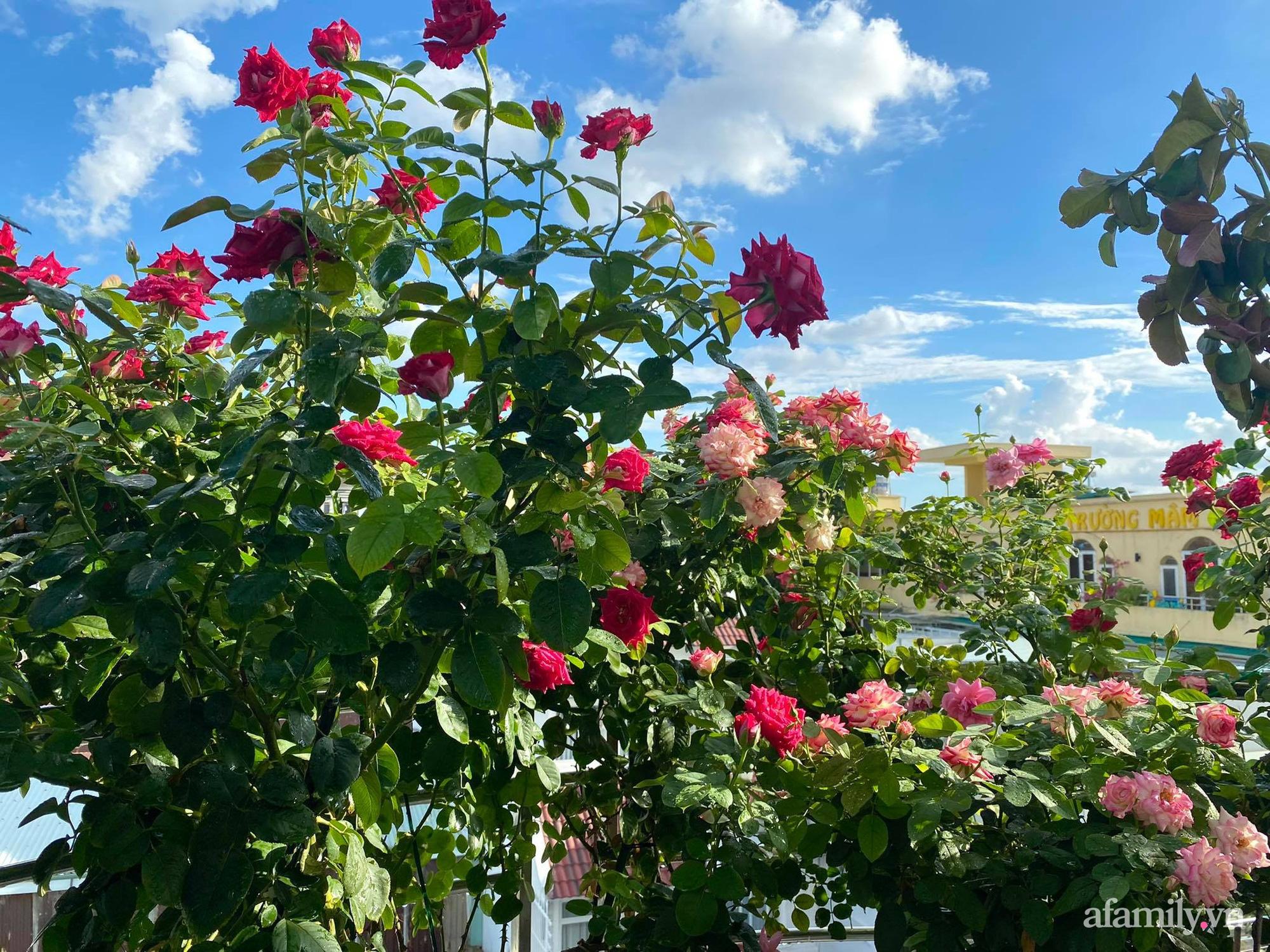 Sân thượng phủ kín hoa hồng và rau quả sạch được chăm chút nhờ bàn tay khéo léo của Hoa hậu Janny Thủy Trần - Ảnh 4.