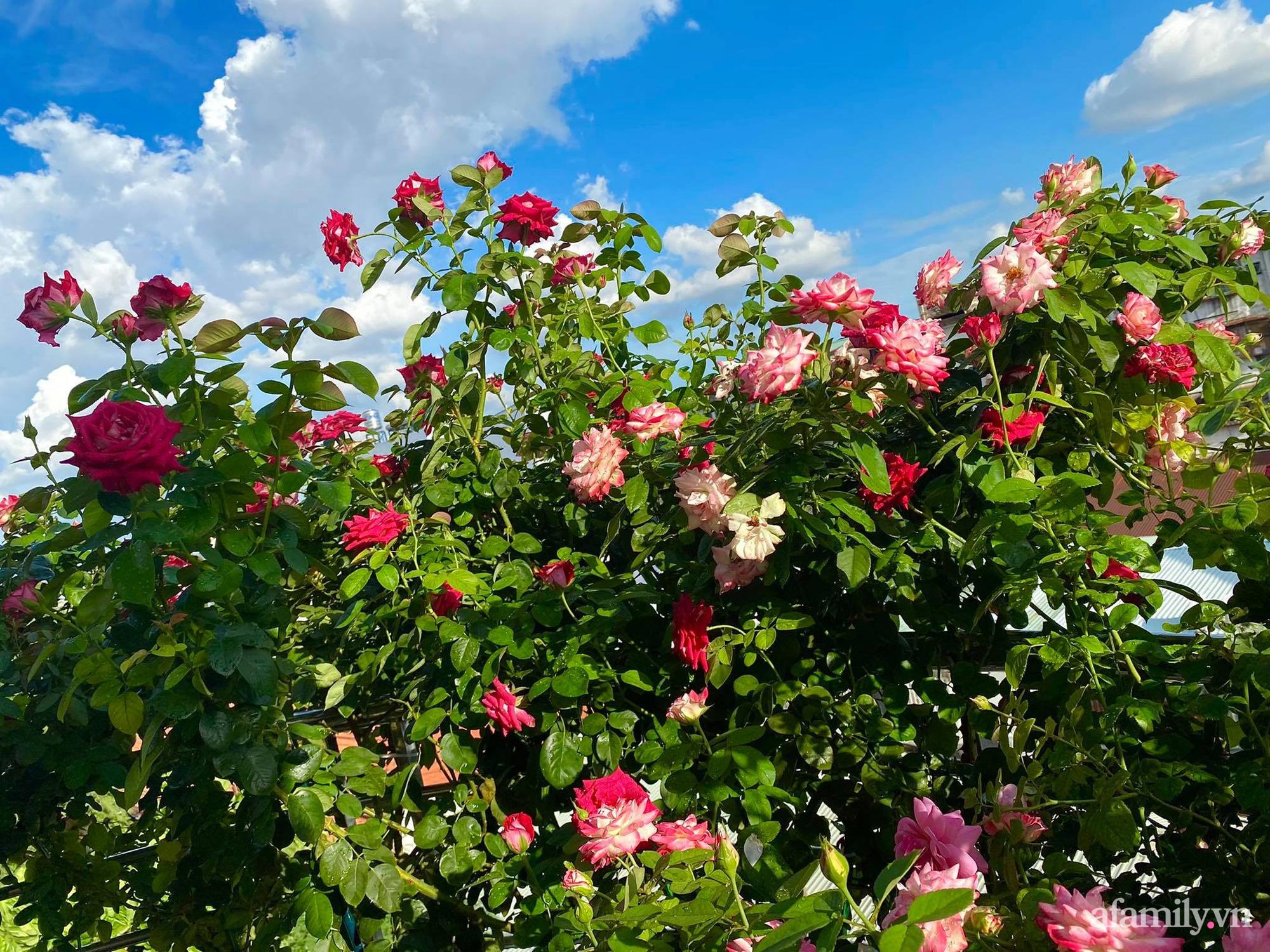 Sân thượng phủ kín hoa hồng và rau quả sạch được chăm chút nhờ bàn tay khéo léo của Hoa hậu Janny Thủy Trần - Ảnh 2.