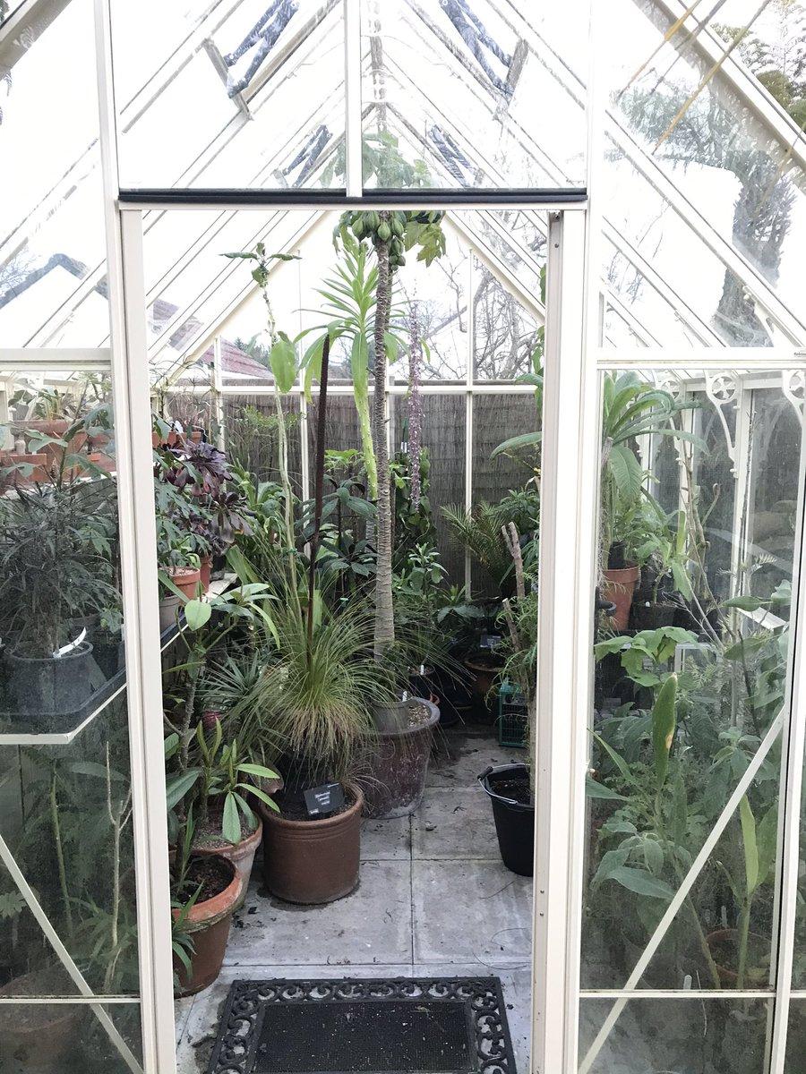 Khu vườn nhiệt đới với hàng nghìn loài thực vật sinh sống của cặp vợ chồng dành 25 năm để chăm sóc - Ảnh 13.