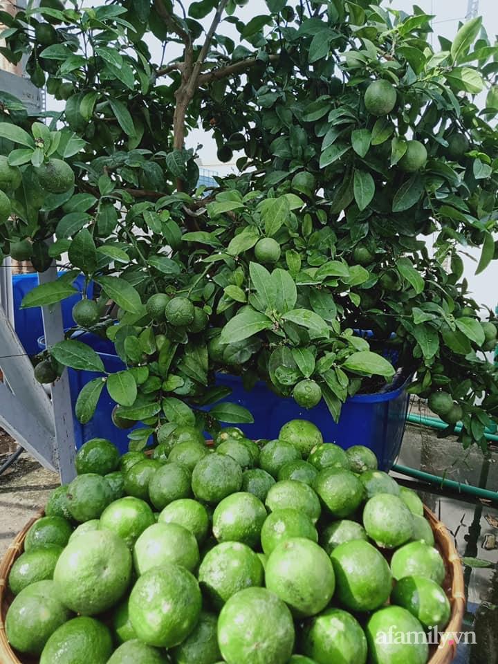Vườn sân thượng xum xuê cây trái của ông bố đảm Sài Gòn giúp gia đình an toàn ở nhà chống dịch - Ảnh 23.
