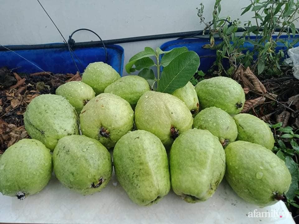 Vườn sân thượng xum xuê cây trái của ông bố đảm Sài Gòn giúp gia đình an toàn ở nhà chống dịch - Ảnh 20.
