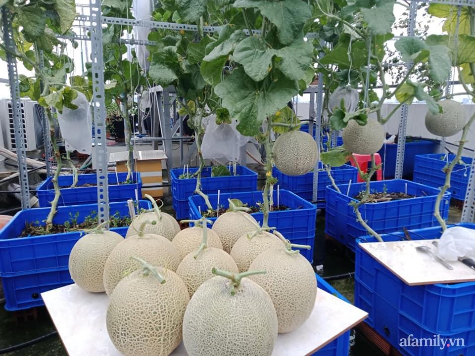Vườn sân thượng xum xuê cây trái của ông bố đảm Sài Gòn giúp gia đình an toàn ở nhà chống dịch - Ảnh 19.