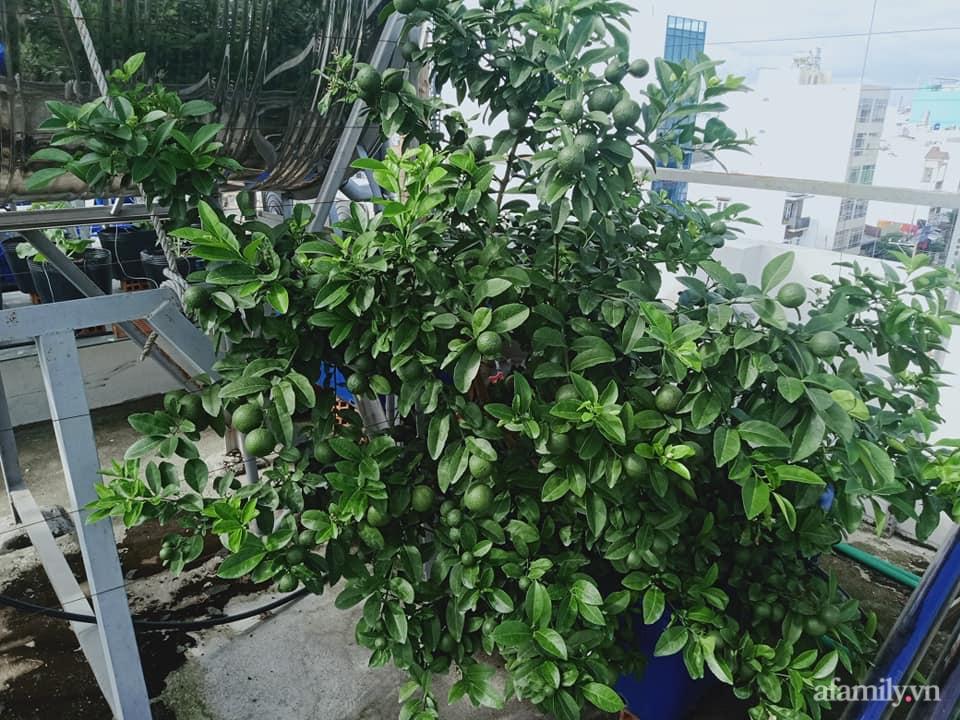 Vườn sân thượng xum xuê cây trái của ông bố đảm Sài Gòn giúp gia đình an toàn ở nhà chống dịch - Ảnh 8.