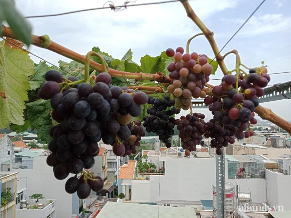 Vườn sân thượng xum xuê cây trái của ông bố đảm Sài Gòn giúp gia đình an toàn ở nhà chống dịch - Ảnh 10.